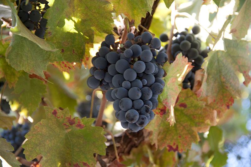 File:Paseo del Vino Winery (16798694220).jpg