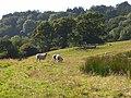 Pastures, Mapperton - geograph.org.uk - 560846.jpg