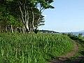 Path at Ardgowan Point - geograph.org.uk - 839347.jpg