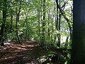 Path in Monkton Wood, Monks Risborough.jpg