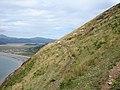 Path on steep hillside at Gallt Ffynnon yr Hydd - geograph.org.uk - 1074878.jpg