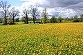 Pavasaris, Pienenes. Spring, Dandelion - panoramio.jpg