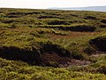 Peat Bog above Alport Dale - geograph.org.uk - 197436.jpg
