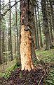 Peeled tree.jpg