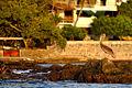 Pelícano tomando el sol (4166735703).jpg