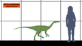 Pelecanimimus SIZE.png