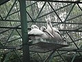 Pelican from Bannerghatta National Park 8579.JPG