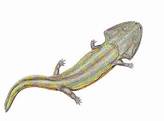 Ischigualasto Provincial Park - Pelorocephalus