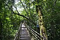 Perspektiven des Parque nacional Iguazú 11 (21927699750).jpg