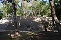 Petén Campechano, Calakmul, Campeche (22186719032).jpg