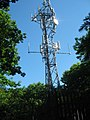 Phone Mast in West Wood - geograph.org.uk - 1331690.jpg