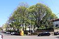 Piazza vasari, giardini 02.JPG