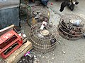 Pigeons in cages at Jatinegara Market.jpg