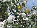 PikiWiki Israel 41379 Snow in Jerusalem.JPG