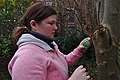 Pink human attaching bird food to a tree in Auderghem, Belgium (DSCF2303).jpg