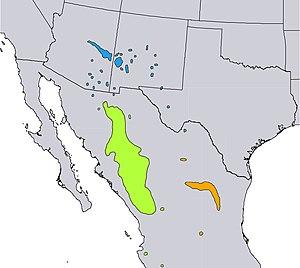 Pinus strobiformis - Image: Pinus strobiformis range map