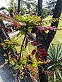 Plantas de Xochicalco.jpg