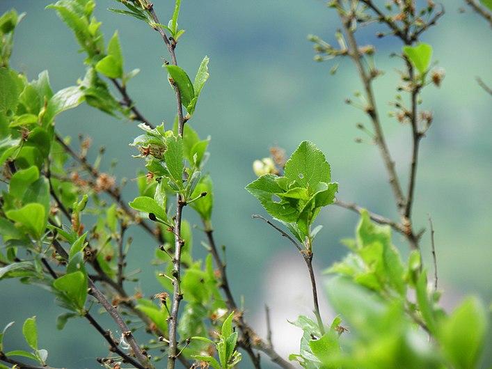 Plante (Angiosperms) (5).jpg