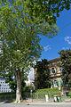 Platanenallee Elisabethstraße - Eine Platane mit alter Villa.jpg