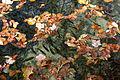 Plitvice Lakes National Park BW 2014-10-13 13-51-53.jpg