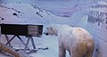 Polar Bear Trap Svalbard 01.jpg