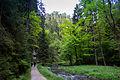 Polenztal - Elbsandsteingebirge - WLE 2015 - 06.jpg