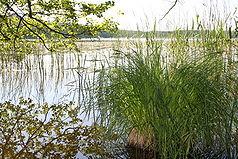 Der Priesterbäker See nahe dem Ostufer der Müritz