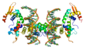 Protein FOXP2 PDB 2a07 3.png