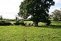 Public Footpath in a Field - geograph.org.uk - 255303.jpg