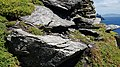 Puffins at Skellig Michael 09.jpg