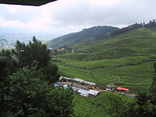 جزيرة جاوة 220px-Puncak_West_Java
