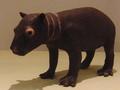 Pygmy hippopotamus Baby Stuffed specimen.png