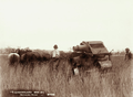 Queensland State Archives 2267 Harvester at Roma 1899.png