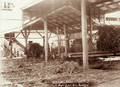 Queensland State Archives 5141 Fairy Mead Sugar Mill Bundaberg c 1896.png