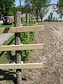 Raspberry Trellis - panoramio.jpg