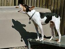 collier anti tic pour chien