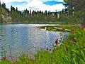 Red Mountain Lake Wildflowers, Wallowa-Whitman National Forest (26776502236).jpg