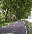 Rheinufer Altrip 01.JPG