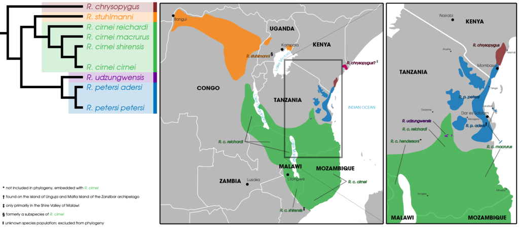 Rhynchocyon Geographic Distribution and Phylogeny (2020).png