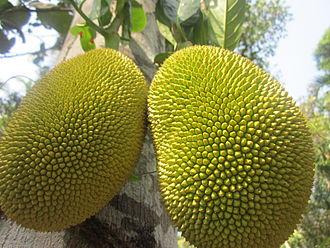 Thalassery - Jackfruit from Dharmadam