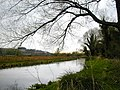 River Itchen near St Cross - geograph.org.uk - 436219.jpg