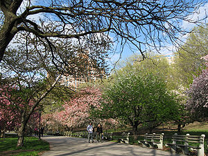 Riverside Park (Manhattan) - Amtrak intercity trains travel through the Freedom Tunnel below this section of the park