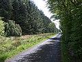 Road through Burnhead Wood - geograph.org.uk - 184187.jpg