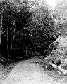 Road through forest, June 24, 1899 (WASTATE 2567).jpeg