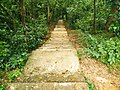 Road to Shuptodhara waterfall.jpg