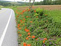 Roadside flowers, Airville, Pennsylvania.jpg