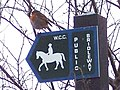 Robin on Bridleway Sign - geograph.org.uk - 330309.jpg