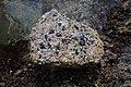 Roca con lapas en Puerto Naos 02.jpg