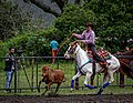 Rodeo Event Calf Roping 32.jpg