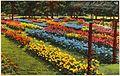 Rose garden, City Park, Reading, Pa (78191).jpg